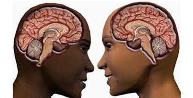 Las diferencias cerebrales entre mujeres y hombres tienen un origen hormonal.