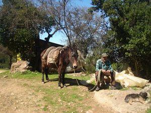 un hombre el caballo y el perro