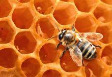 abejas-miel-propoleo