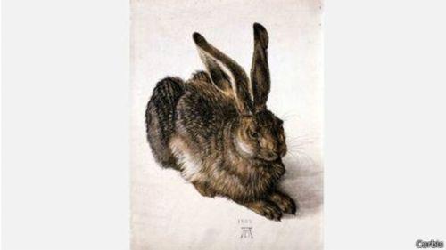conejo foto 2